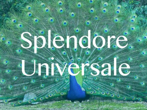 Splendore Universale